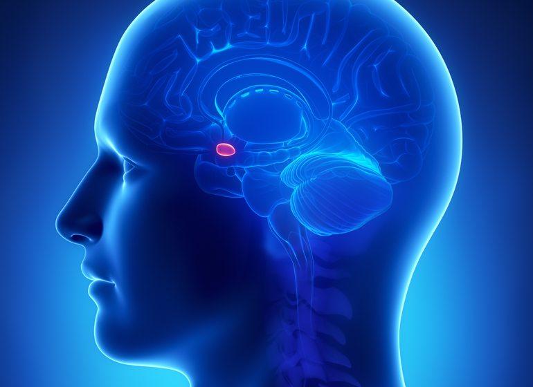 Brain-Amygdala-Strategies-shutterstock_103381406