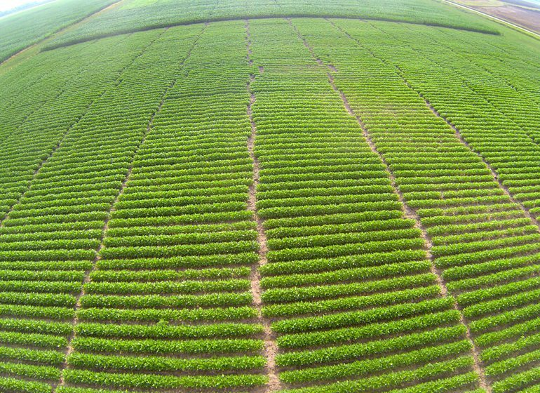 Using a drone allows DMZ Aerial to do crop scouting activities without having to walk an entire field.